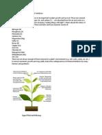 DIY Aquaponics 5 Natural Plant Fertilizers