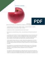 Beneficios y Composición de La Manzana