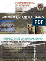 Aspecto de Un Animal Sano