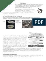 Relatório Biologia Caracterização de Classes
