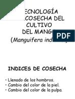 Clase12B Postcosecha Mango