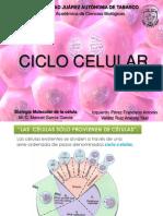 Ciclo Celular Presentacion