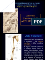 Anatomia Artos Up