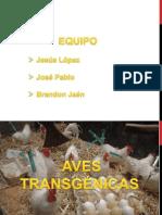 AVES TRANSGENICAS.pptx