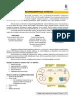 25.1 - Antibacterianos en patología respiratoria