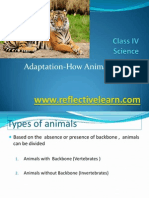 Summary Adaptations How Animals Survive Upload