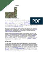 Analysis of the Wind Tree