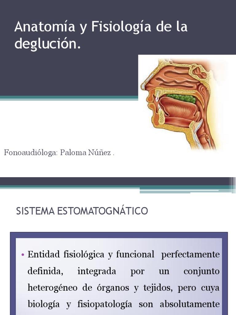 Anatomia y Fisiologia de La Deglucion c.1