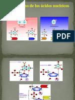 Metabolism Acid Nucl 2014