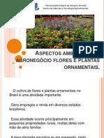 aspectosambientaisdoagronegciofloreseplantasornamentais-110611185001-phpapp01