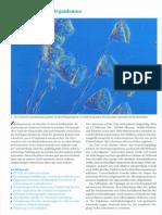 2_zellbiologie.pdf