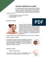 ANATOMÍA laringe