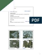 Sedimentpetrologie Skript 10 2