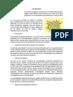 Coanoflagelados y amebas.docx