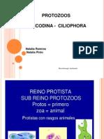 Exposicion Microbiologia. Protozoos, Sarcodina, Ciliophora