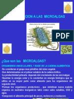 Introduccion a Las Microalgas