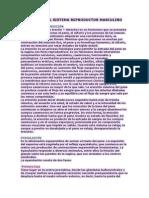 Fisiología Del Sistema Reproductor Masculino