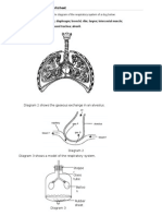 C1 Respiratory System Worksheet