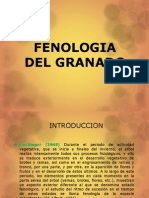 Fenologia Del Granado