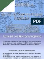 Bioquimica Expo 3