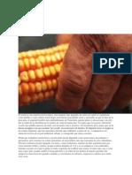 articulo del maiz.docx
