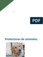 Hablar en Publico, Protectora de Animales.
