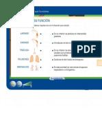 El aparato respiratorio humano.pdf