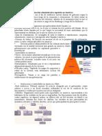 organizacin administrativa