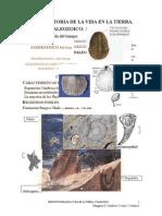 Paleozoica Word