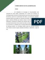Información Como Sobre Se Cultiva Microalgas.