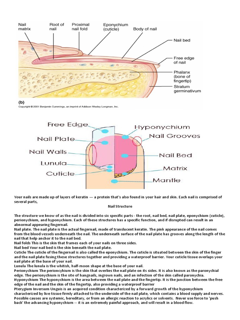Your Nails Are Made Up of Layers of Keratin | Nail (Anatomy) | Foot