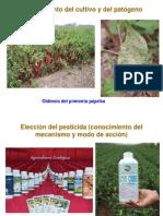 PCEP.Proteccíon (3)