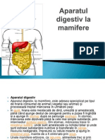 Aparatul Digestiv La Mamifere