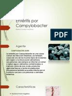 Enteritis Por Campylobacter