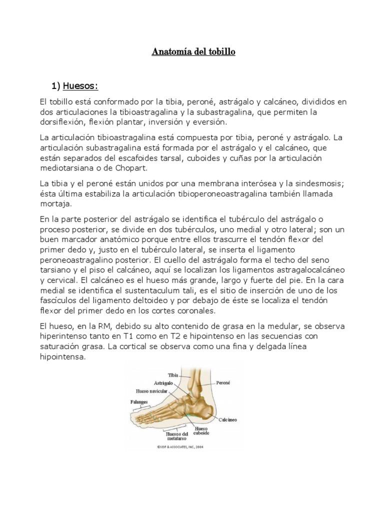Anatomía Del Tobillo Word