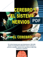 Cerecbro y Sistema Nervioso -PRIMER PARCIAL