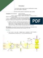 Fotossíntese imprimir
