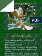 7.Magnoliophyta