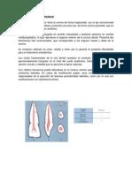 Incisivos y Premolarws