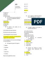 EXAMEN  DE ANATOMIA N°1