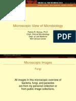 Murray MicroImages Fungi