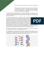 La Genética Molecular Es La Rama Que Estudia La Estructura y La Función de Los Genes a Nivel Molecular