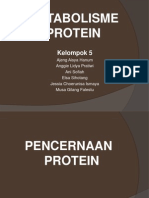 About Protein Ppt (5)