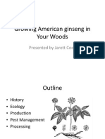 Woods Grown American Ginseng