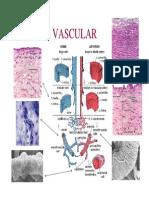 8Sistema Vascular 2013