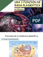 2 Estructura y Función de La Membrana
