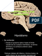 hipotalamo.ppt