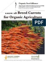 How to Breed Carrots for Organic Agriculture