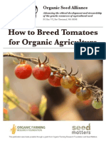 How to Breed Tomatoes for Organic Agriculture