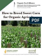 How to Breed Organic Sweet Corn